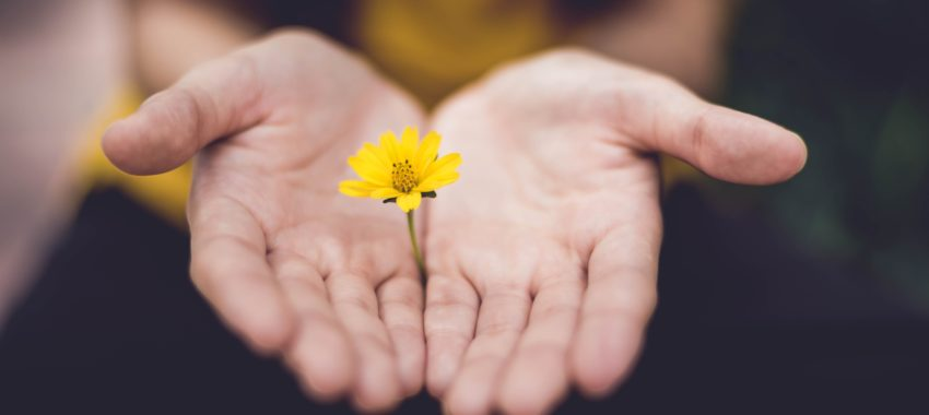 Flower_in_palm
